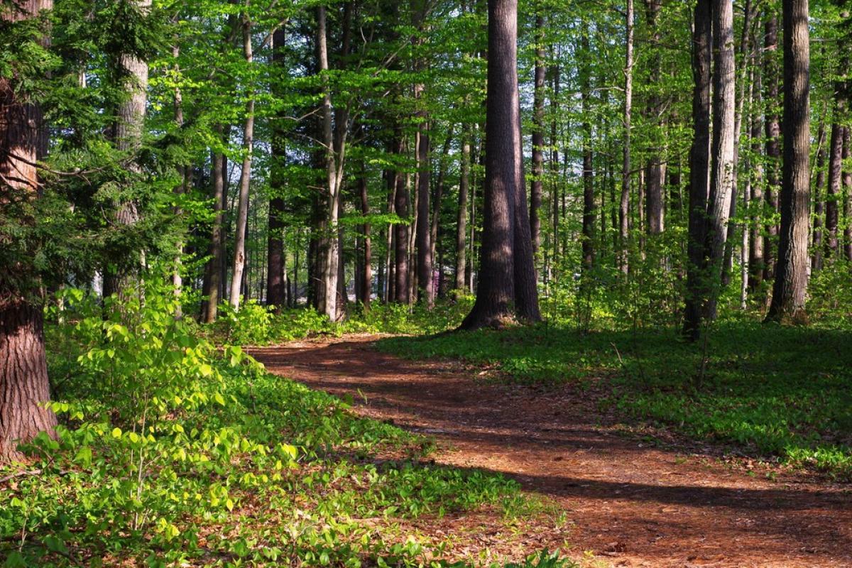 The Sam Ristich Trail