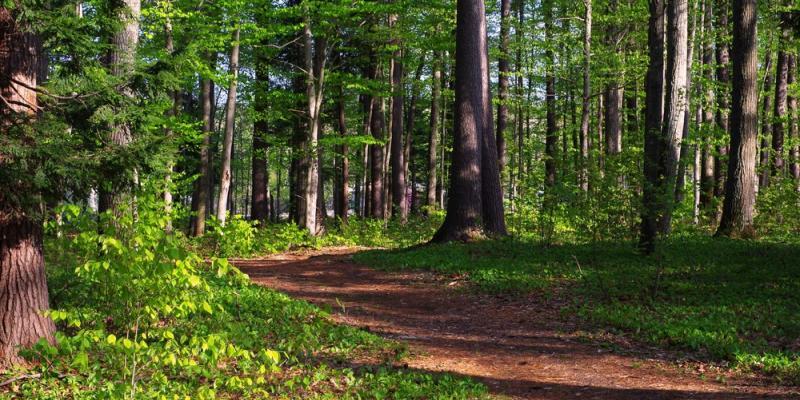 Sam Ristich Trail